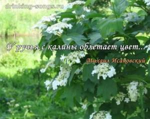 текст песни ой цветет калина