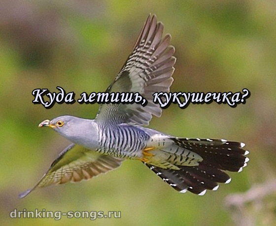 Скачать Торрент Кукушечка - фото 2
