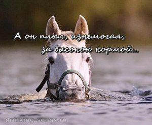слова песни про коня