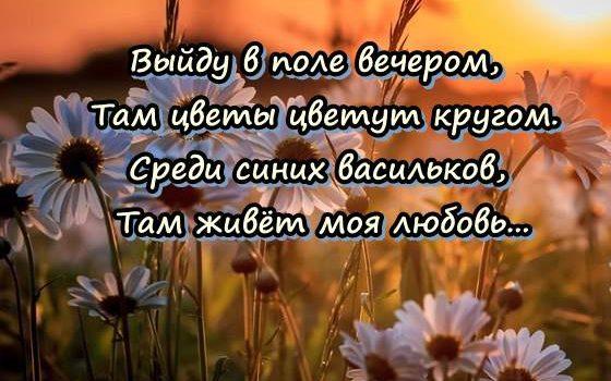 ПЕСНЯ АХ РОМАШКА БЕЛАЯ ЛЕПЕСТОЧКИ НЕЖНЫЕ СКАЧАТЬ БЕСПЛАТНО