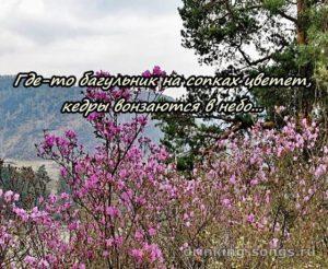 текст песни где-то багульник на сопках цветет