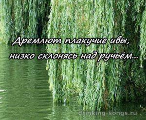 текст романса дремлют плакучие ивы